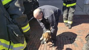 2-year-old beagle Zeke after being rescued by firefighters