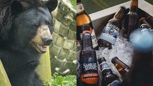 bear; beer bottles