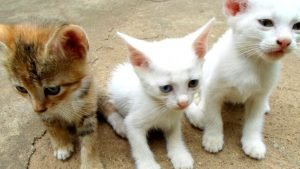 group of three cats