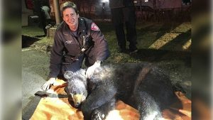 A firefighter from the Danbury Fire Department poses with the rescued and sedated bear