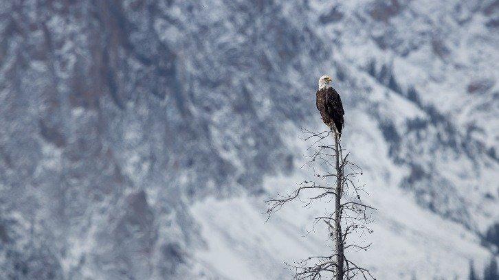 eagle on tree