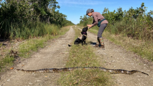 Dog handler Paula Ziadi instructs Truman after he tracked down an 8-foot-python in Miami-Dade County, Fla.